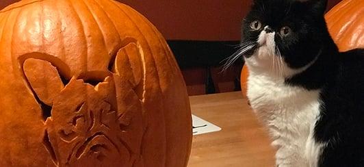 pumpkin carving pets