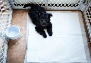 puppy on a pee pad