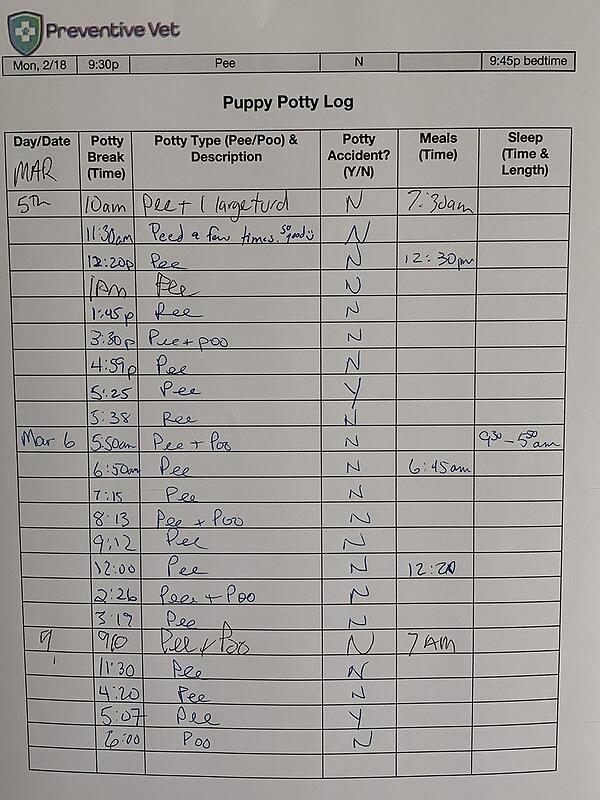 puppy potty log filled out example
