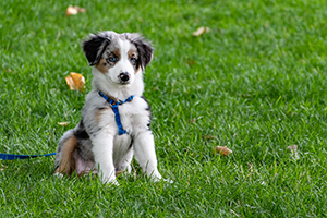 puppy sitting outside on leash