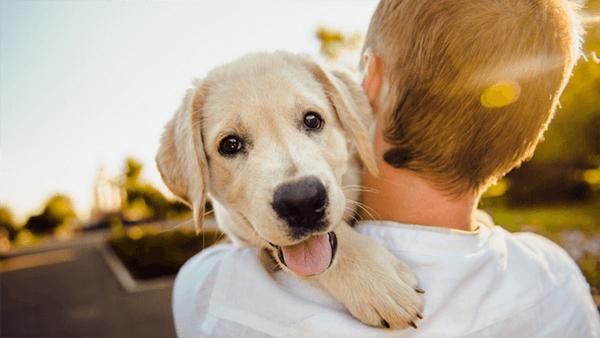 puppy socialization workshop