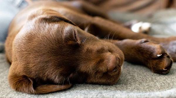 puppy upset tummy