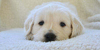 puppy adjustment period
