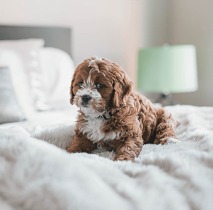 puppy-on-bed
