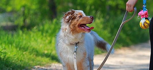 puppy-on-leash-training-toy