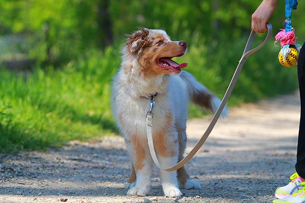 puppy-on-leash-training-toy-600x400