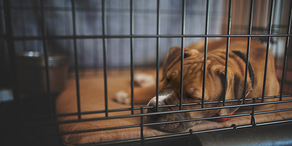 puppy-sleeping-in-crate-1