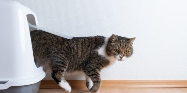 reducing litter box messes and smells