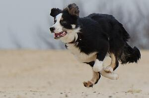 running-dog-for-treat