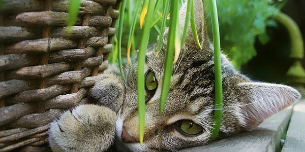 safe plants for cats