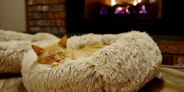 senior-cat-sleeping-by-fire