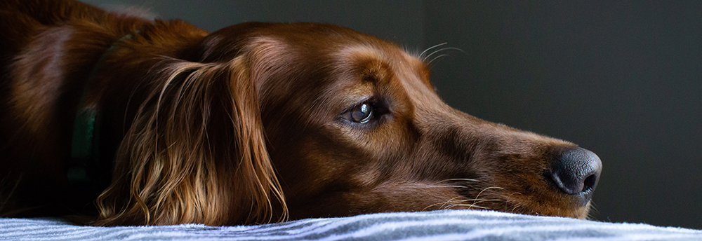separation anxiety help for dogs