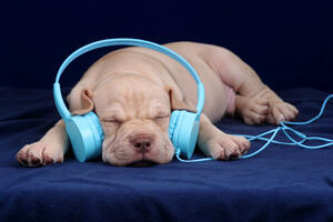 puppy-sleeping-to-calming-music