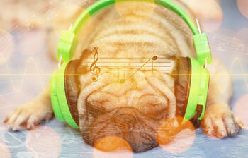 pug-listening-to-calming-music