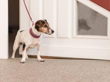 dog-front-door-dash-leash-hero
