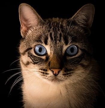 signs of cat bite abscesses