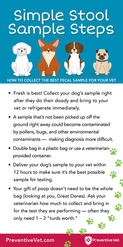 simple stool sample steps infographic