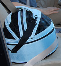 sleepypod-belted in_FRONT seat