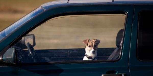 small dog looking out window of suv with cracked windows