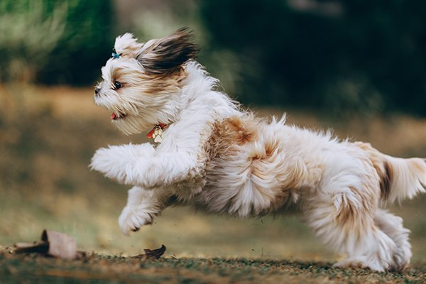 small dog running fast