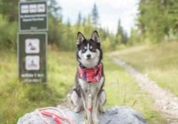 small husky mix dog sitting at trailhead on hike