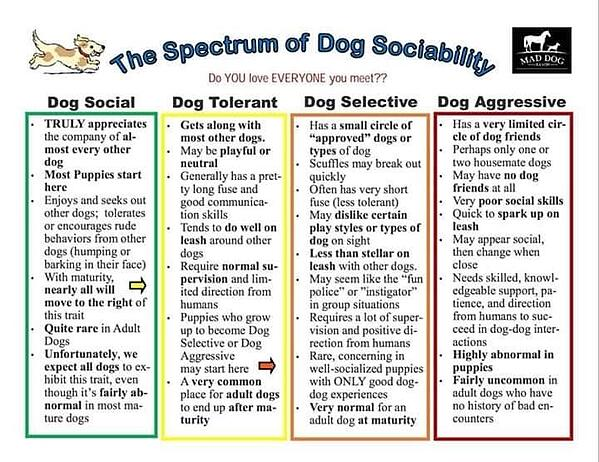 spectrum of dog sociability