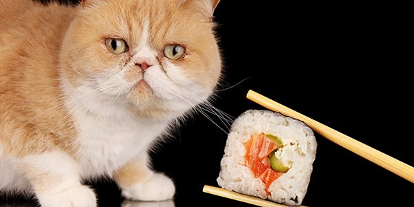 sushi not for cats