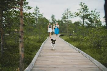 Terrier Off-Leash Wood Walkway