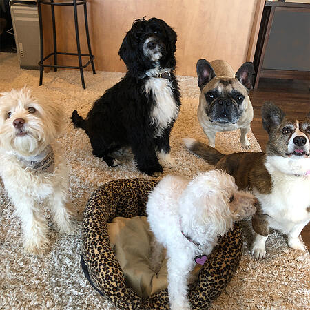 the dogs of preventive vet