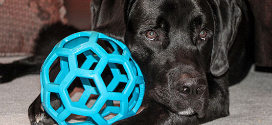 the-best-interactive-toys-and-food-puzzles-for-your-dog