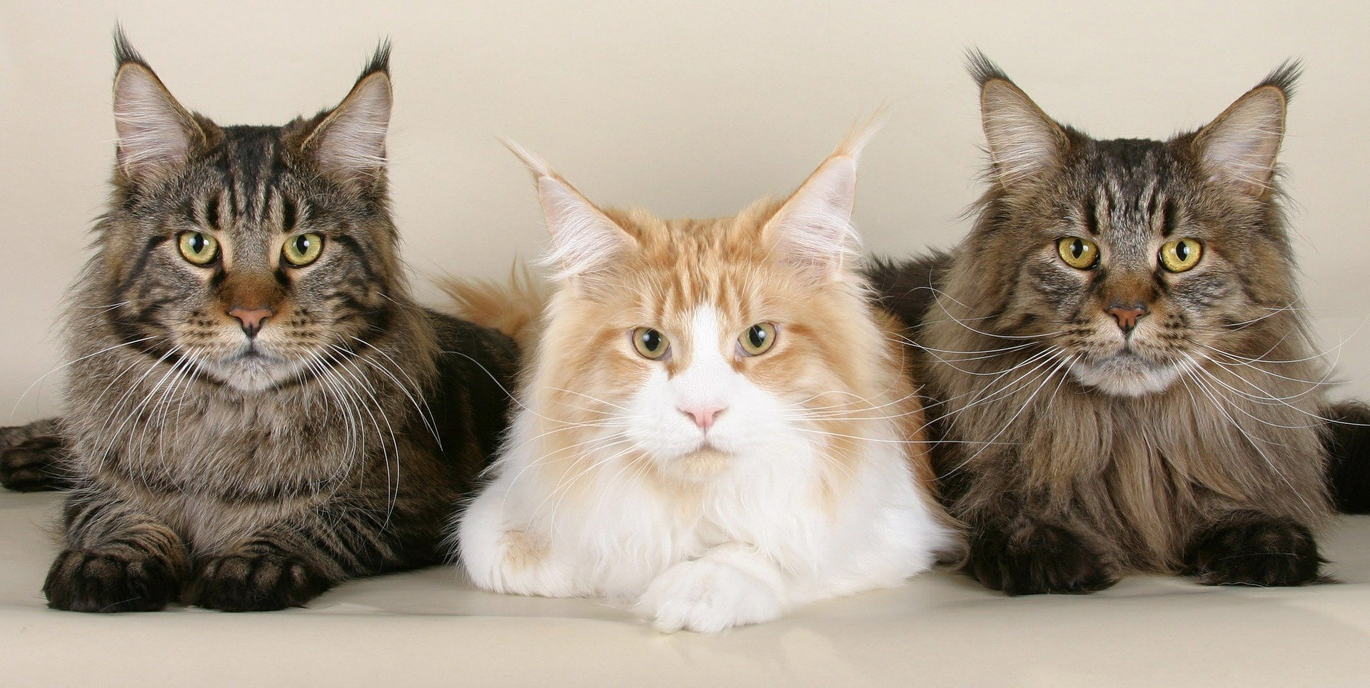 three-cats-side-by-side