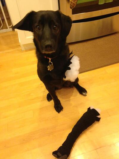 tripod-stuffed-animal-costume