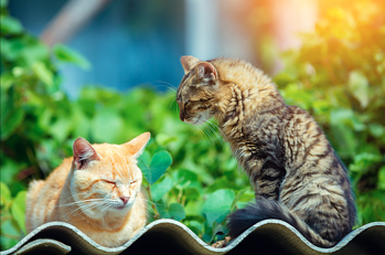 two cats relaxing