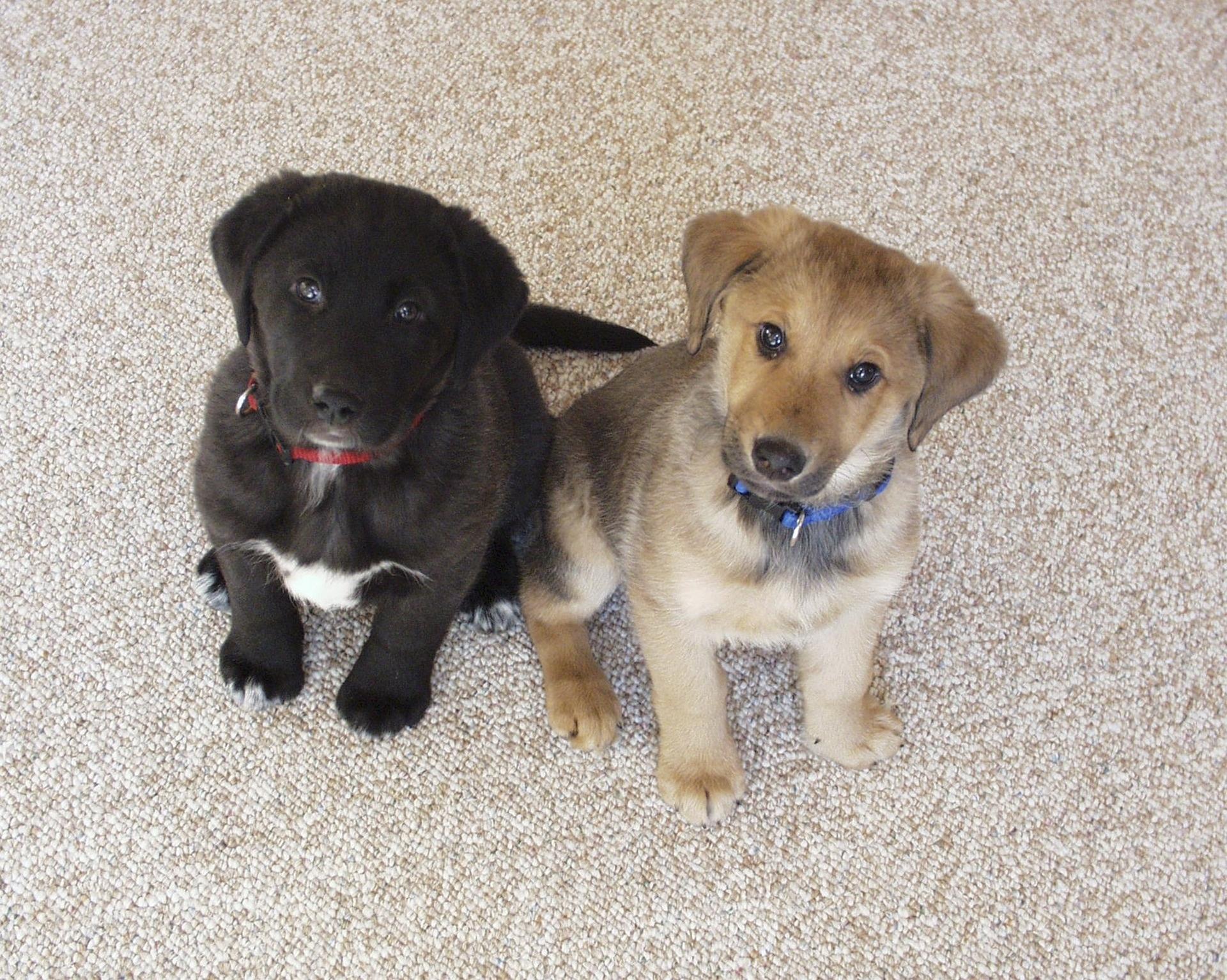two puppies sitting.jpg