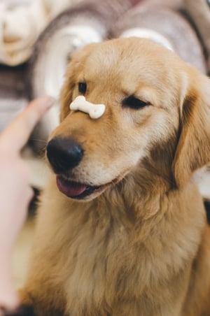 using dog treats the right way