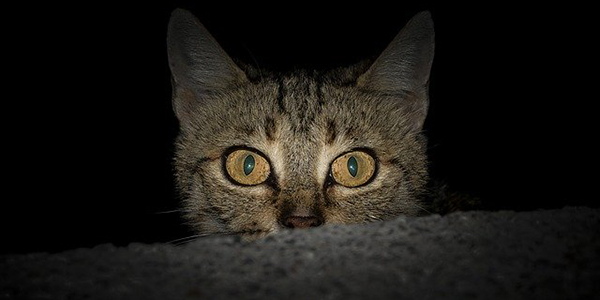 what cats do at night