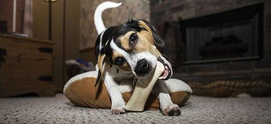 safe bones for my dog