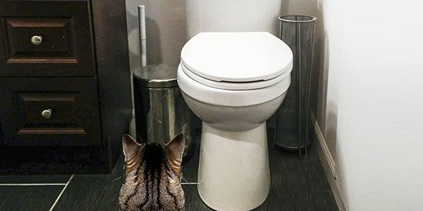 why not to toilet train your cat