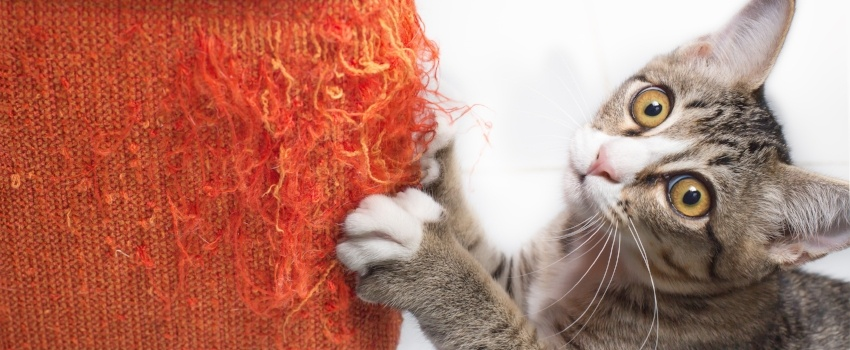 why-cats-scratch-furniture.jpg