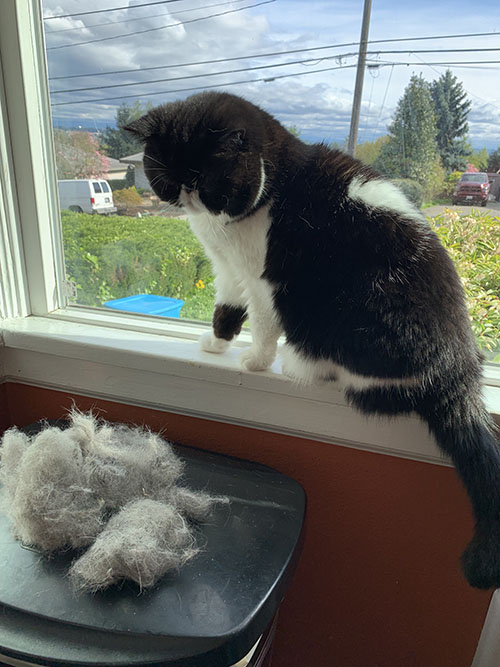 why-you-should-clean-your-cat-tree-often