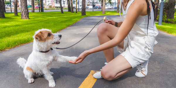 woman greeting a dog asking for a shake