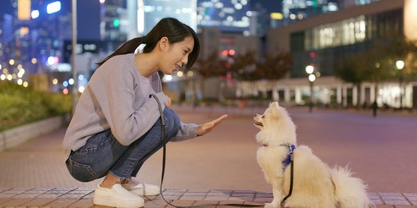 woman training pomeranian to sit and stay outside