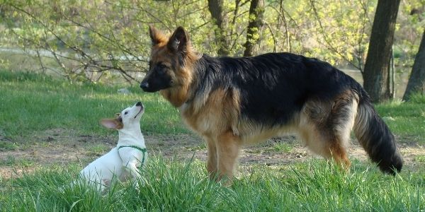 young dog with older dog at the park
