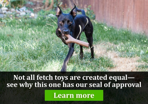 Click here to see what makes this dog fetch toy the best around