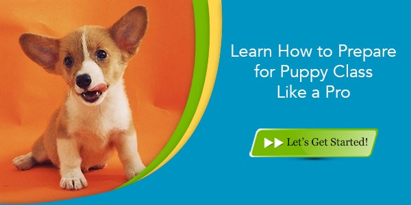 learn-how-to-prepare-for-puppy-class-like-a-pro