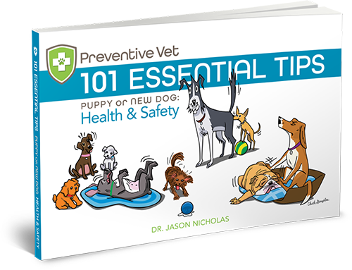 101 Essential Dog Health and Safety Tips