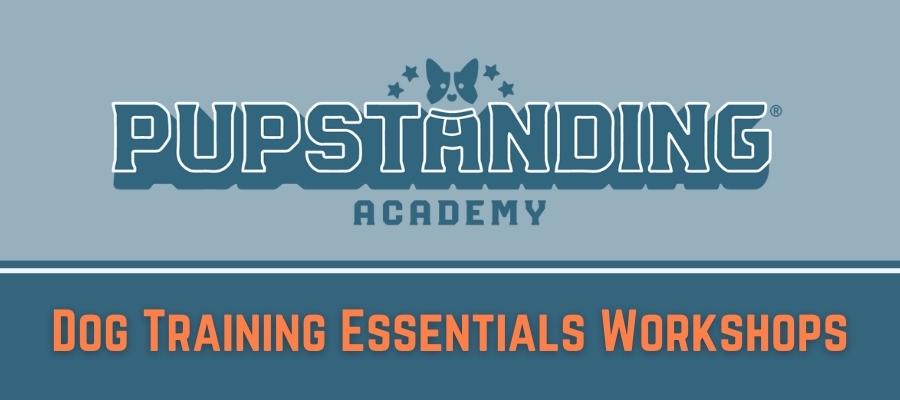 900 Dog Training Essentials Workshops