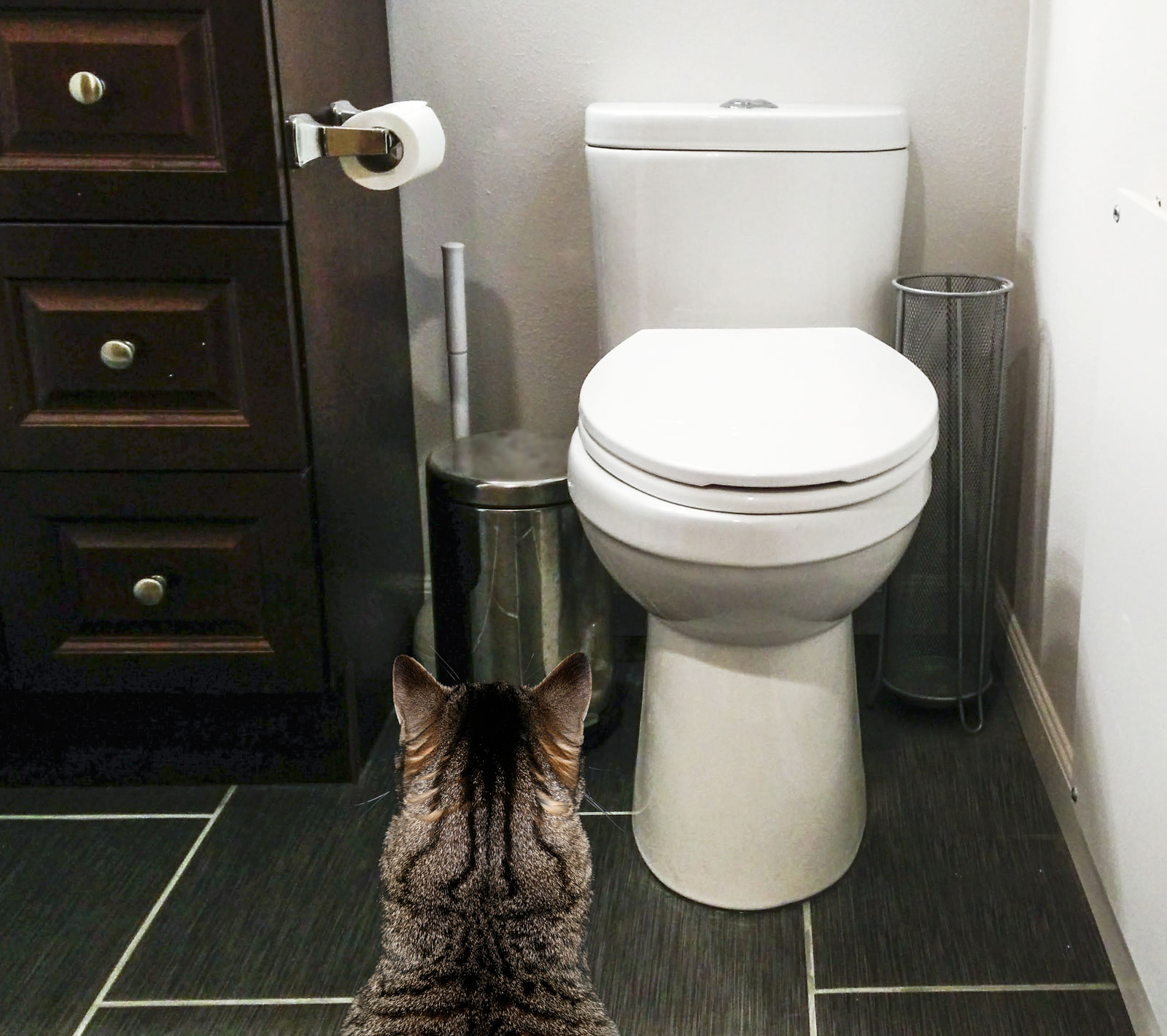 7 reasons not to toilet train your cat