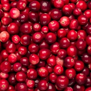Cranberry & Your Pet's Urinary Health — Miracle Berry or