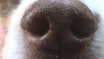 Dog-Wendy-nostrils.jpg